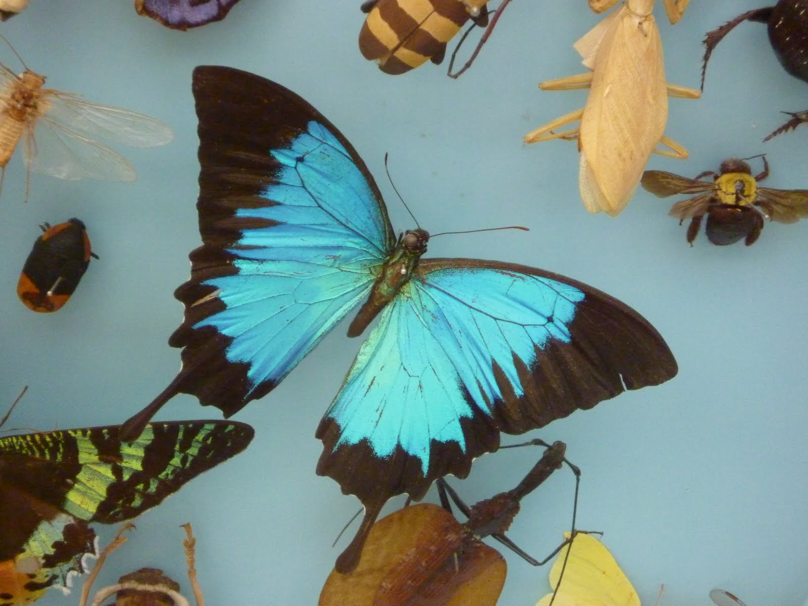 So, When I Went To The Oxford University Museum Of Natural History I Was  Delighted To See Lots Of Butterflies On Display. They Really Are Lovely To  Look At ...